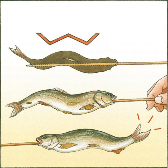川魚の串打ち