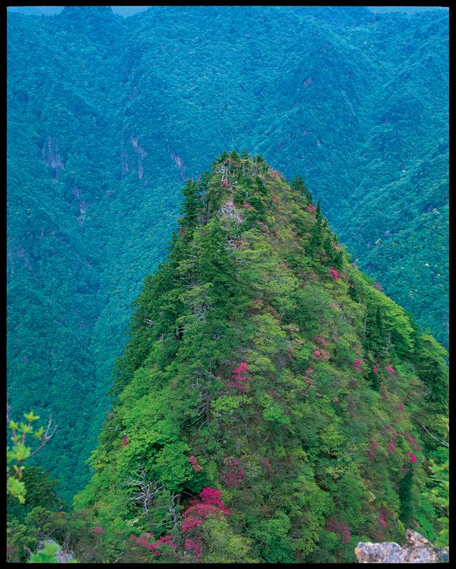 大台ヶ原の森