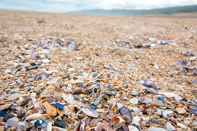 大須賀の砂