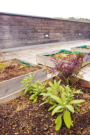 ベランダで家庭菜園 ➡屋上の隅にプランターを設けて 家庭菜園を楽しむ。屋根の断熱効 果もアップ。「ときどき子供とテ ントを張って寝ています」