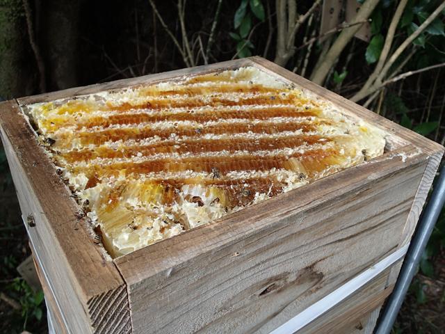 巣箱 ニホンミツバチ