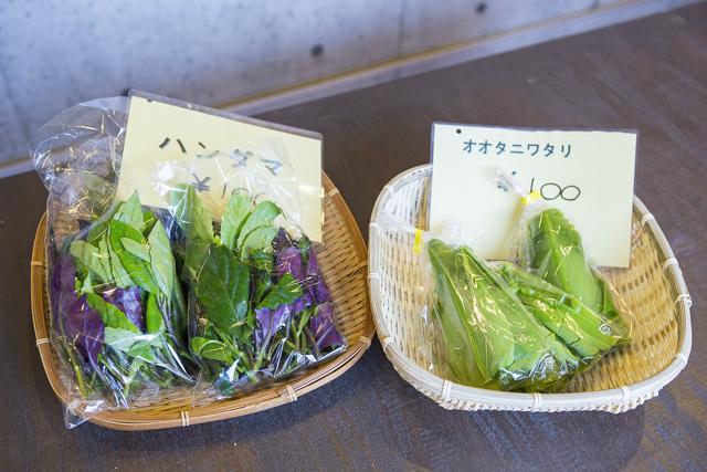 右のオオタニワタリは天麩羅にする。左はハンダマ。おひたしにすると美味しい。
