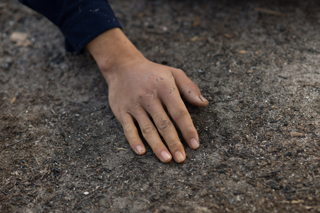素手で灰をなじませつつ、地面の温度が十分に下がったことを確かめる。