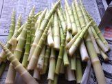 これは皮をむいたネマガリダケ。村人はジャガイモなどの野菜、サバ缶と一緒に味噌汁にして食べる。初見は「まずそー」だったが、いまはこの汁がないと春が来た気がしない。