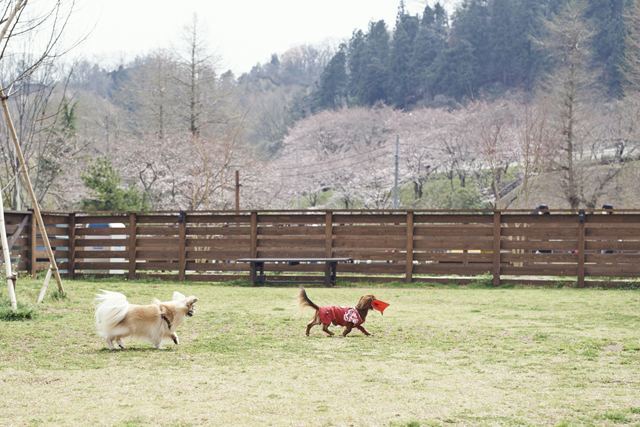 小型犬専用エリア(390㎡)。