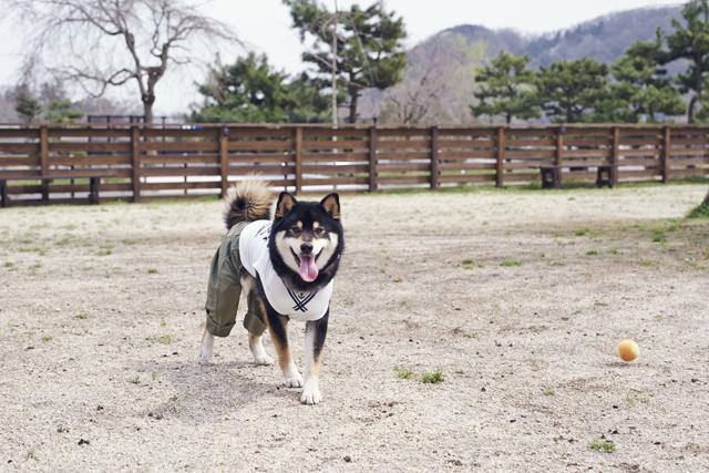 中・大型犬専用エリア(510㎡)。