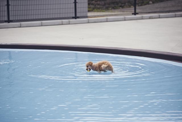 小型犬用のドギーズプールは40㎡で、水深最深部は30㎝。
