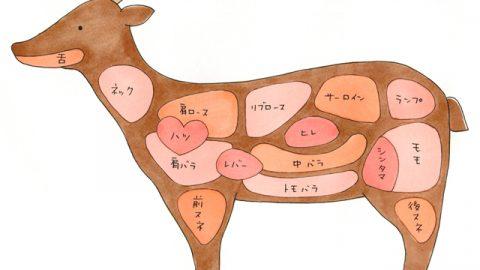 シカ肉の各部位の名称。