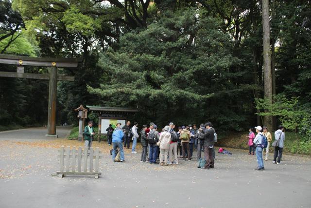 たくさんいるように感じましたが、この日はかなり少なかったよう。お天気の良い日などは100人にもなるという明治神宮探鳥会
