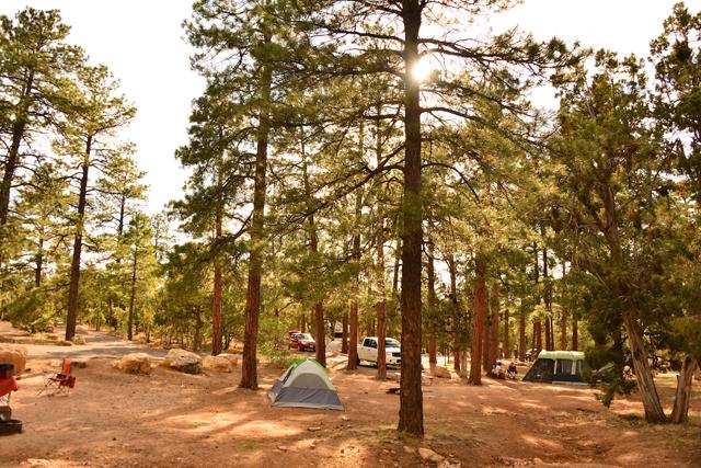 自分達のスペースはとても広いので、好きな場所を探してテントを設置