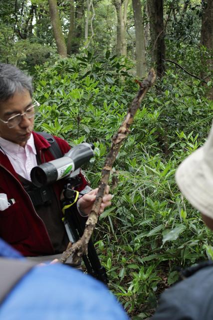 枯れ枝に生えたキノコの説明をしてくれるリーダー