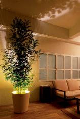 鉢にLEDライトが内蔵され、天井に植物のシルエットを投影する「フォレスタリウム」。(S¥17,600、L¥46,000)。