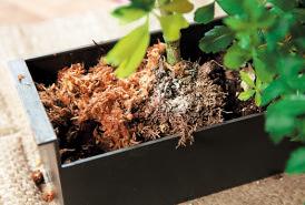 隙間や表面に水苔を敷き、土をカバー。植物も固定され、壁にかけやすくなる。