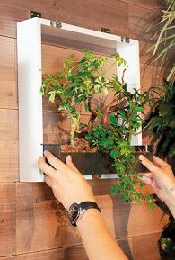 付属の石膏クギで壁にベ ースを固定したら、貯水プランターをはめ込む。