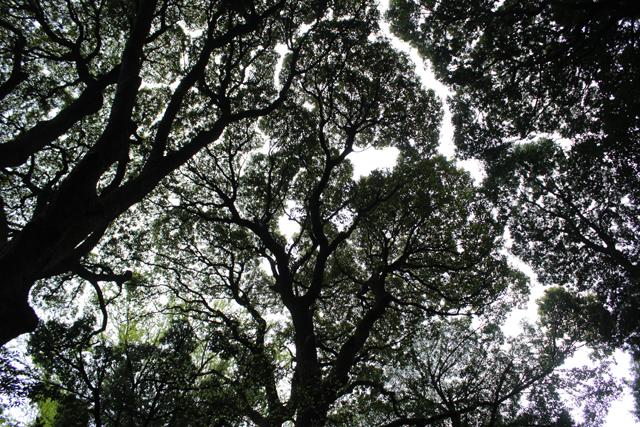逆光でモノクロに見えますが、木々の枝振りに注目