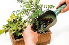 バランスよく植物を配置したら、隙間を埋めるように培養土を足す。