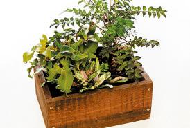 まず植えたい植物をポット のまま置いてみて、配置を 決める。