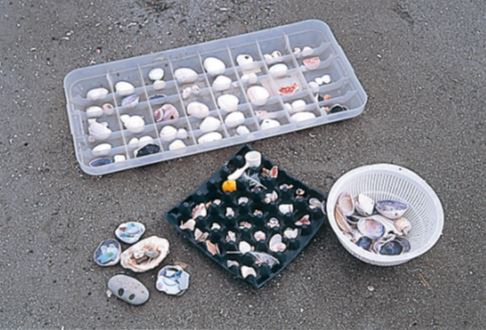 貝殻にビーチグラス、陶器 のかけらや鳥の羽、木の実 なども発見。その場で標本 のように並べてみるのも面 白い