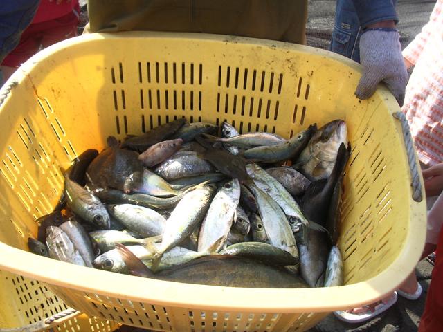 獲れた魚は「網元の宿 甚 五郎」のバーベキュースペー スで料理。雨天の場合は屋根 付きスペースをご用意。