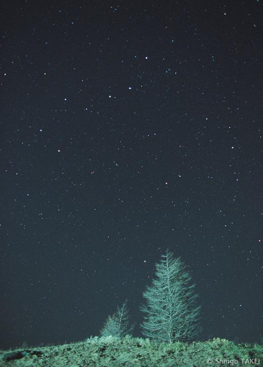 星夜の親子 / 長野県