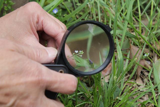 池の周りには春の草花も。ルーペで観察するとさらに面白い。