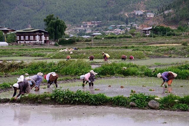 bhutan0403