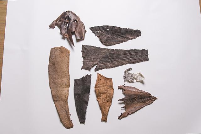 カワハギ、ブリ、クロダイ、サケ、ヒラメ、タラ、オニカジカなどさまざまな種類の魚の皮を使う。緑茶や柿渋などのタンニンに浸けてなめしたもの。