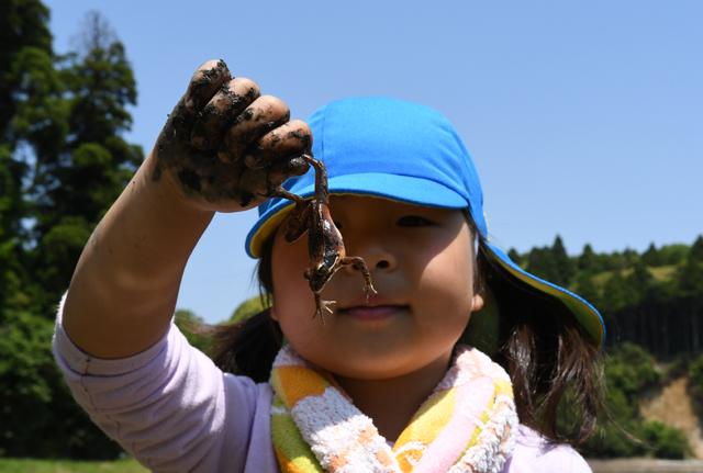 カエルを捕まえた女の子。持ち方がちょっと乱暴なのは、逃げるカエルを必死に掴んだ証拠