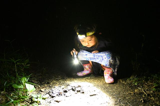 闇に溶け込み地面をうろつく虫たちを探す