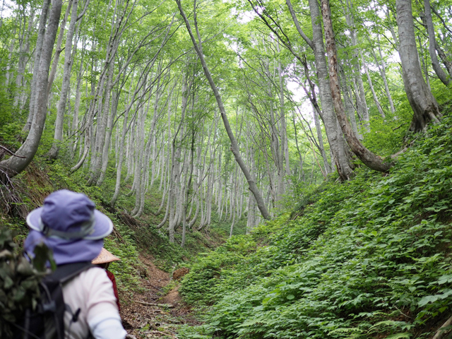 見事なウトウとブナ林。深呼吸しまくりです。