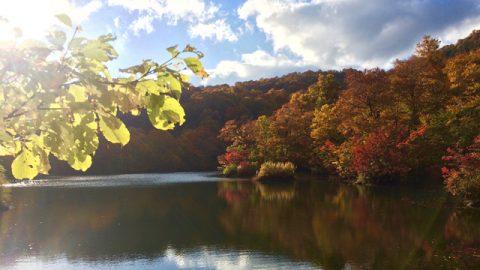 キャンプ場近くの鎌池の紅葉。秋の彩り。