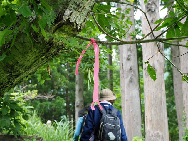 藪や倒木で隠れていた道を再び開いたら、迷わないようにテープで印をつけます。