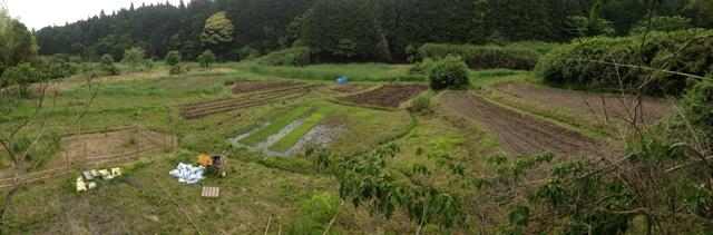 谷津田の全景。田んぼを再生させることで、里山の生態系が作られていく
