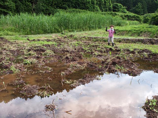 森に囲まれた谷間の湿地。耕作には非常にやっかいな土地だ