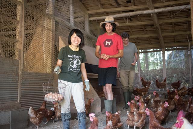農場見学に訪れた外国人を鶏舎にご案内