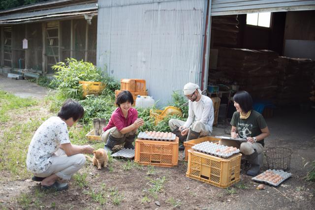 卵の出荷準備をする農場のスタッフ