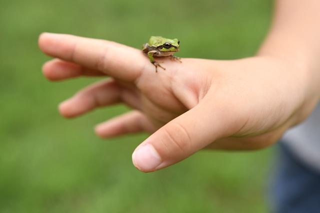 椿の実ではなくカエルを見つけてきた子供も。「これなら上から落ちてくるのが遅いからキャッチしやすい」という大発見をした