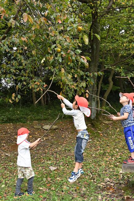 最終的に成功へ繋がったのはこのジャンプ&枝の合わせ技 この作戦に変わってから、多くの子供達の枝が柿にヒットしはじめた