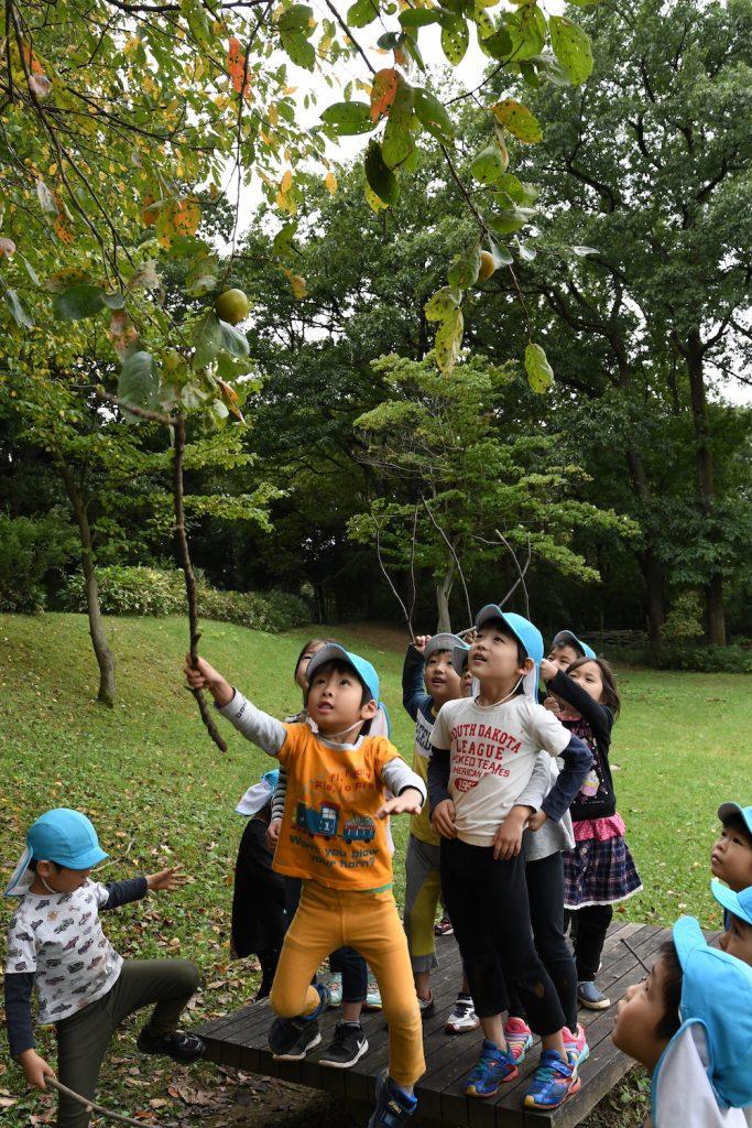 """Y字の枝を作って柿を引っかける""""ひっかけ作戦""""もかなり有力だった。しかしながらジャンプ力の問題で断念"""