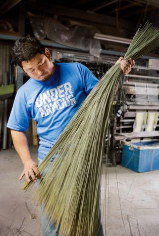 、畑で刈り取ったばかり のイグサの長さをそろえカット する。材料のていねいな準備こそが、いいイグサ製品の要となる。