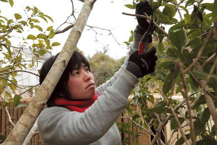 新潟県生まれ。公園などのウメ剪定や草刈り・伐採などを作業。1級造園施工管理技士。1級造園技能士。1級土木施工管理技士。