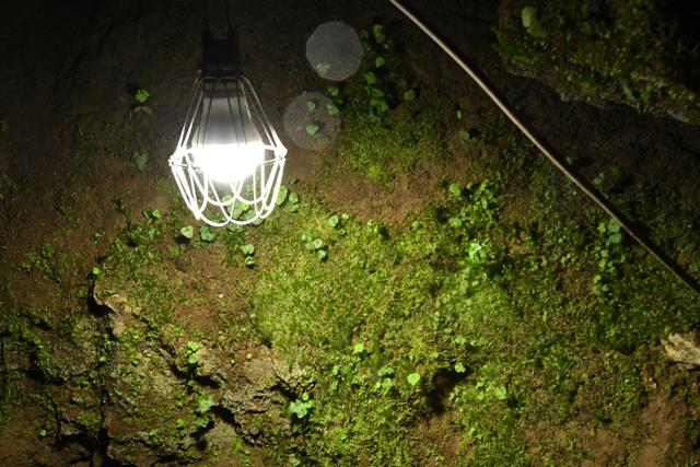 鍾乳洞内はシンプルなライトがあるだけ。これがまたいい!