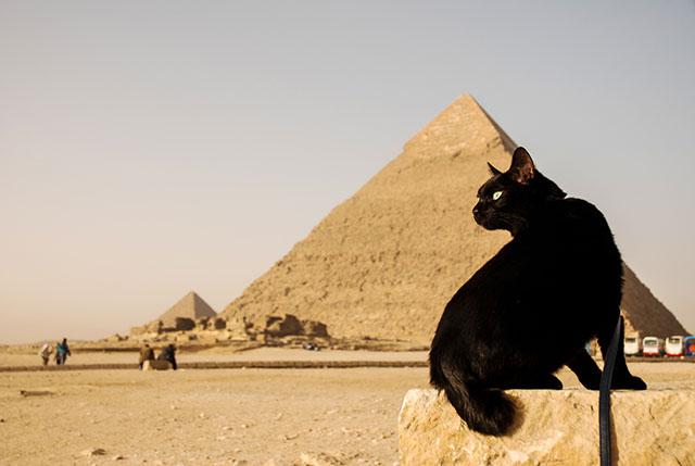 ギザ(エジプト) 2010
