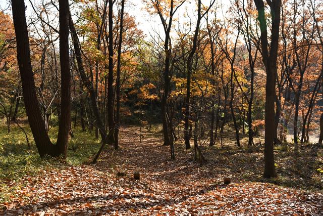浅い角度で入ってくる陽光と冬色の雑木林。 遊ぶにはもってこいの時期だ。