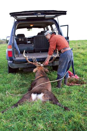 「獲物には敬意を表したいから、でき るだけ荷台に積む」ものの、庭先で獲れた大物は草地を引いて運ぶ。