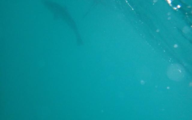 水中カメラの映像