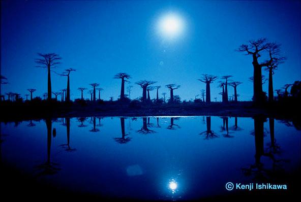 「湖に映るバオバブ」マダガスカル