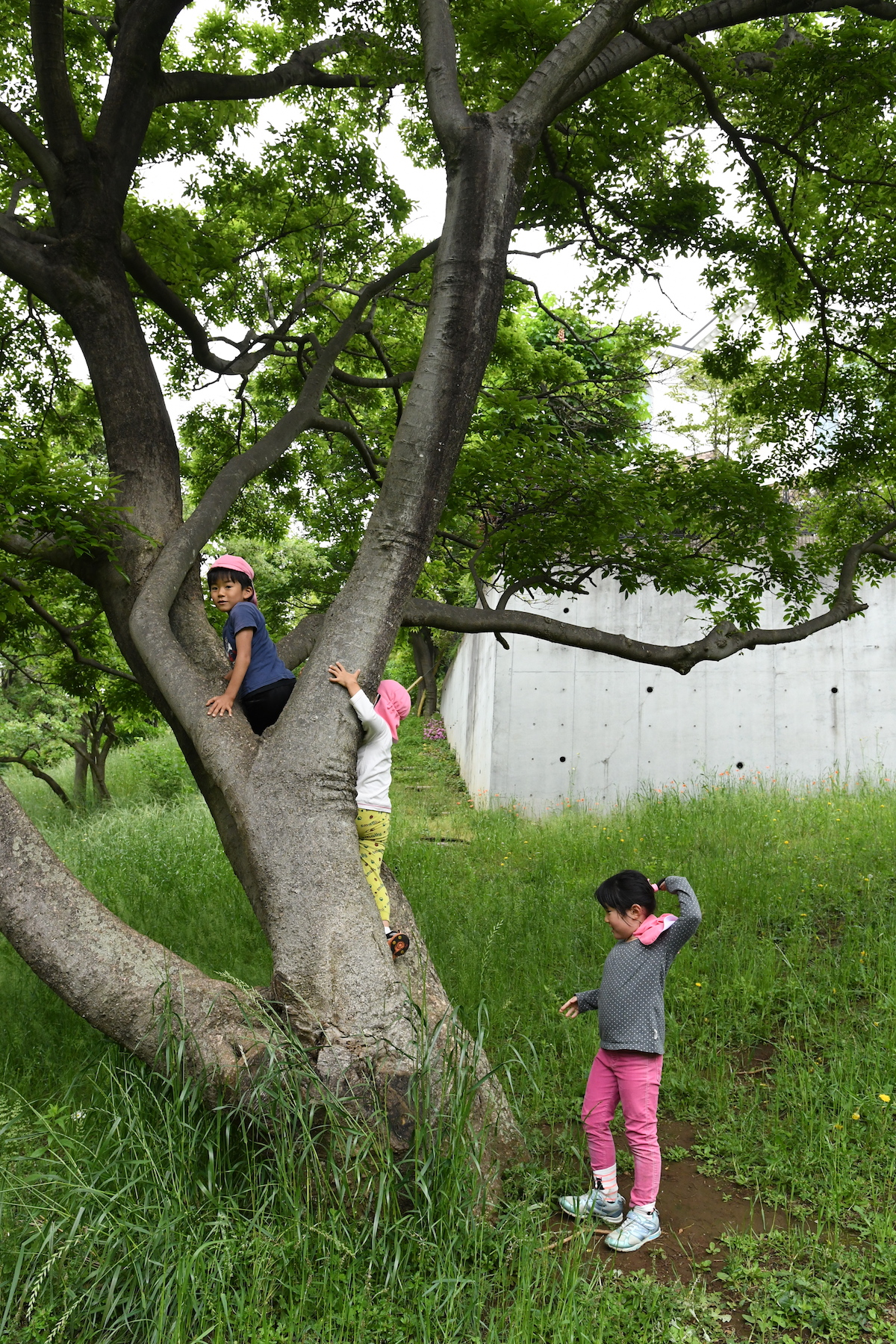 クライマーもびっくり 子どもが木登りをするときの4つの極意be Pal