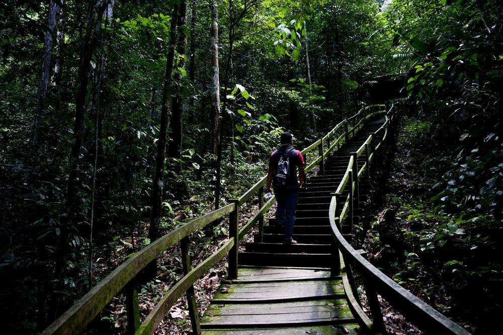 ブルネイの森への旅 】赤道直下...