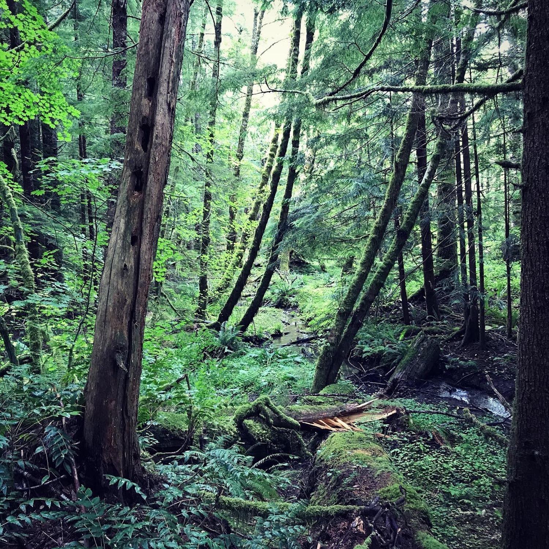 oregonforest